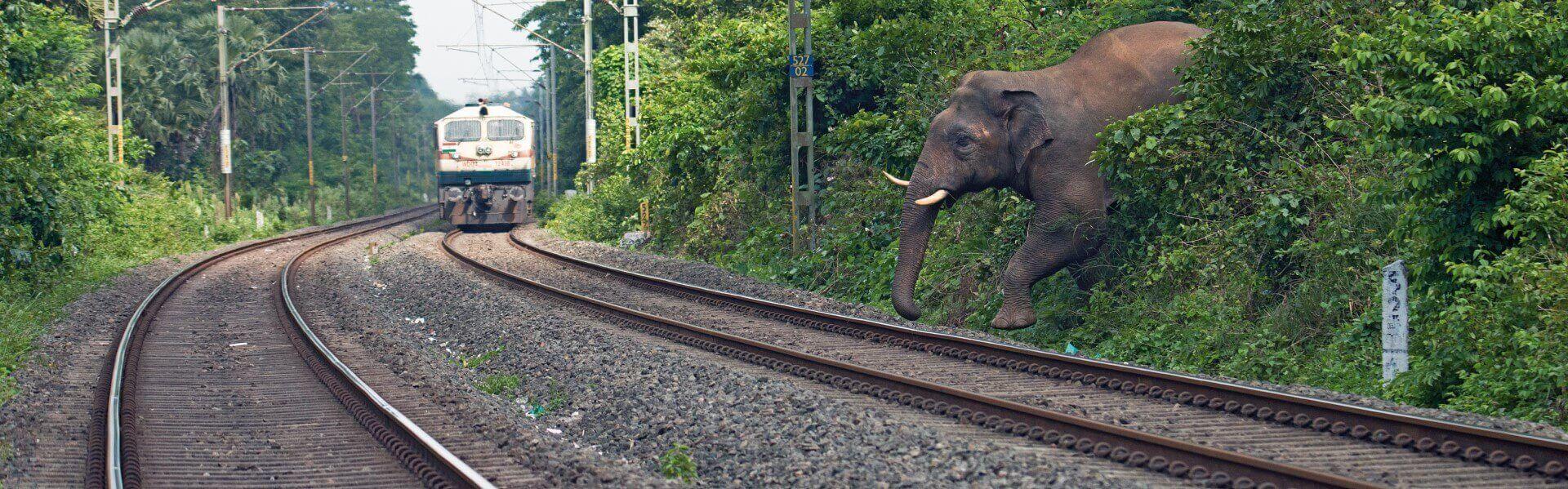 Asian Elephant Palakkad Kerala