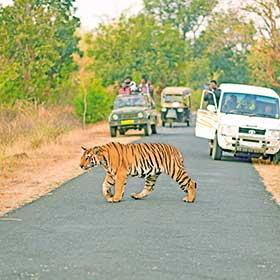 Amrut Naik Tiger Umred