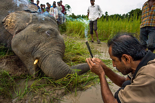 This elephant was killed by a homemade bullet soaked in acid - the animal died a slow painful death of septicaemia. Giving animals space to move when planning new roads, dams and villages is vital and that is why our Protected Areas need buffer zones. Bad past planning does not warrant inaction when we know the right answers.