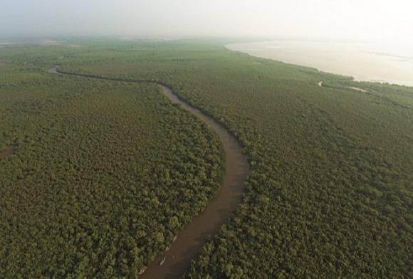 Mangroves of Appa