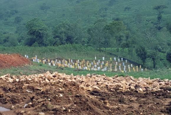 Restoring Indian Forests