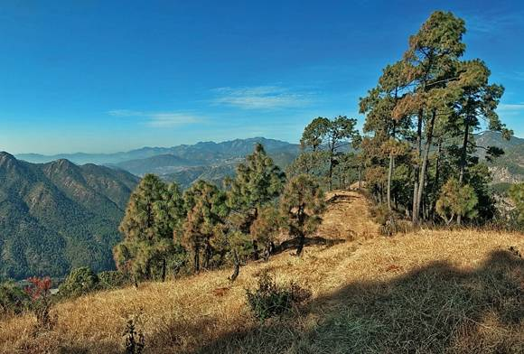 Another November In The Forests Of Uttarakhand