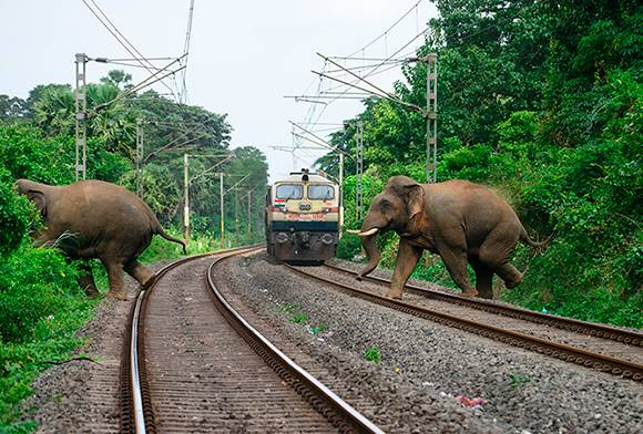 Railway Minister Urged To Act On Rise In Elephant Deaths By Train Collisions