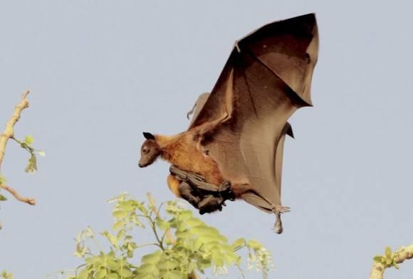 Batting for Bats