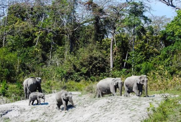 How Coal India Limited is Devastating Upper Assam's Rainforests