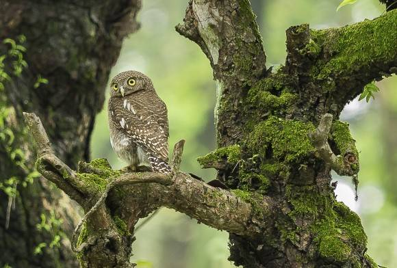 Dehing Patkai: Where Owls Thrive