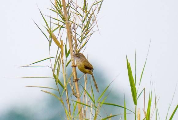 India's Rarest, Least-Known Birds