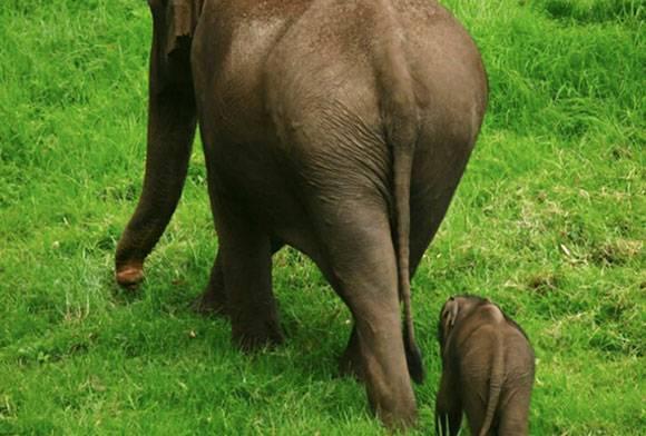 Right Of Passage: Elephant Corridors Of India