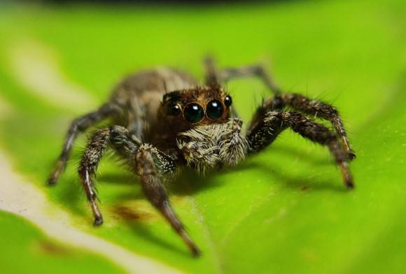 My Bungee Jumping Spiders