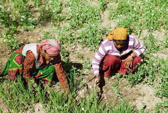 Feeding The World: Women And Biodiversity