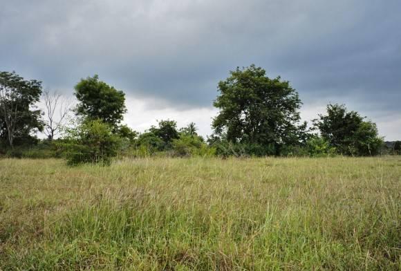 Last Grassland Standing