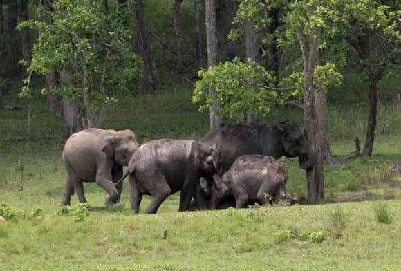 Forest Fires, Elephants and People