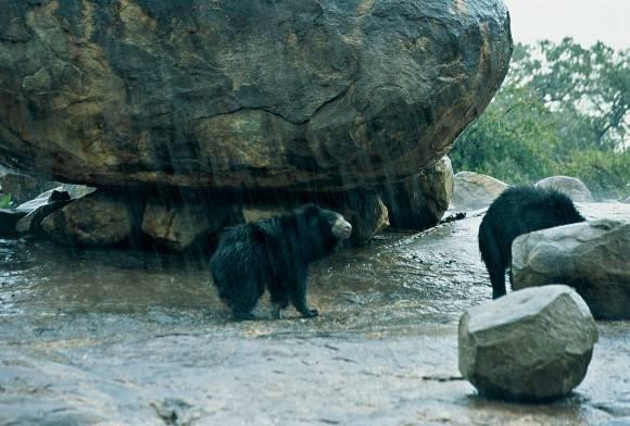 Daroji: Sloth Bear Sanctuary