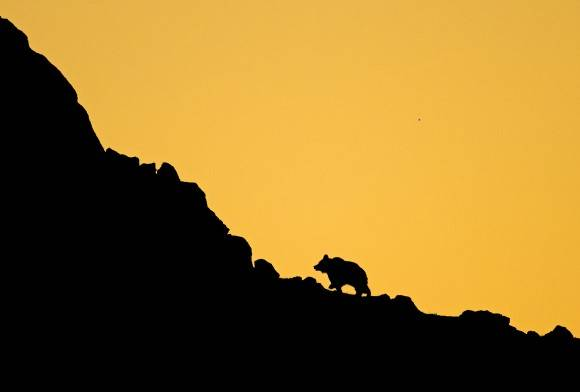 Bears On The Edge