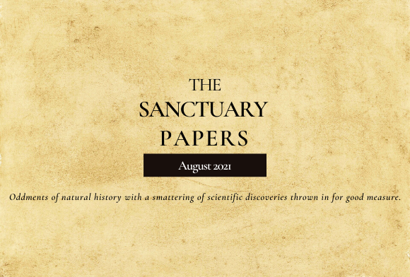 The Sanctuary Papers: August 2021