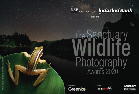 The Sanctuary Wildlife Photography Awards 2020