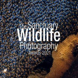 The Sanctuary Wildlife Photography Awards 2021