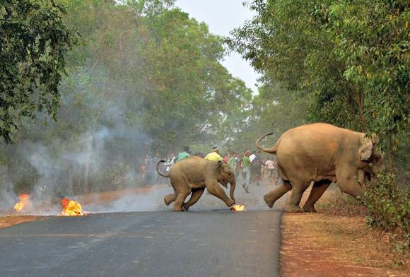 Humans and elephants